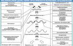 Рак почки с метастазами: куда метастазирует, как быстро развивается