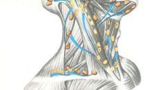 Антибиотики при воспалении лимфоузлов: какие принимать для лечения и помогут ли