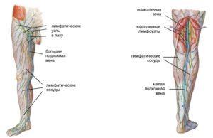 Лимфоузлы на ногах: расположение, фото, причины воспаления и лечение
