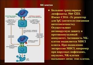 Низкие лимфоциты в крови у ребенка