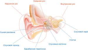Холестеатома: симптомы, диагностика и операция по удаления при поражении уха, кости или мозга