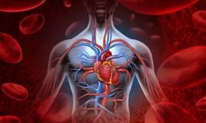 Сколько живут с острым лейкозом крови: шанс выжить, лечится или нет