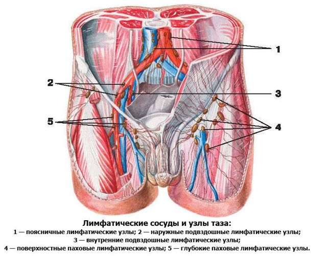 Подвздошные лимфоузлы: причины увеличения, норма, где находятся