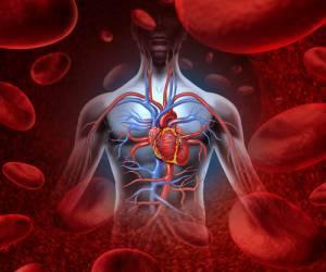 Лимфоциты: повышены, понижены, норма в крови, о чём говорят отклонения